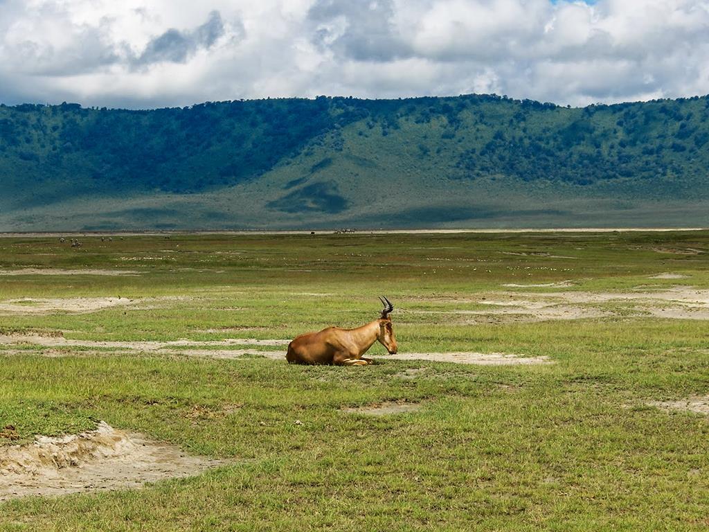 Highlights of Tanzania Safari 5D/4N (Tarangire, Serengeti & Ngorongoro)
