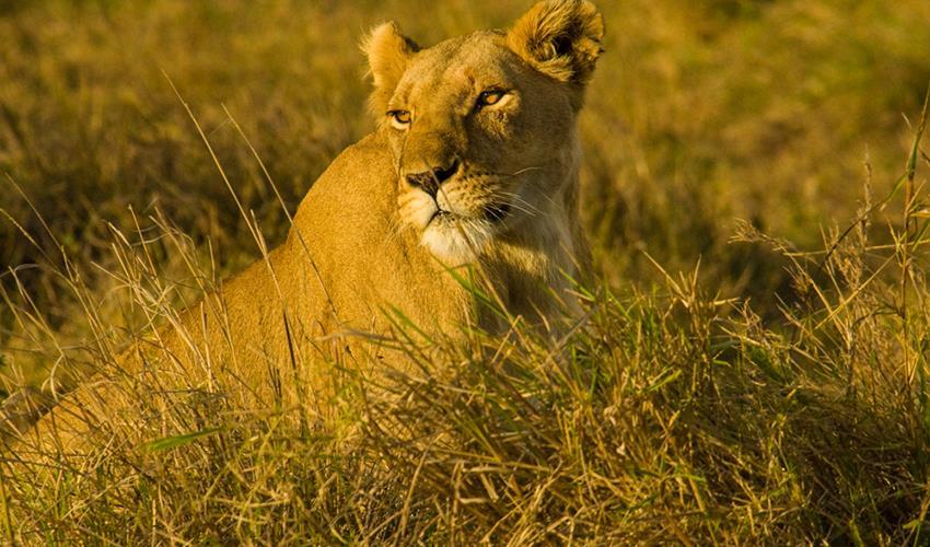 Masai Mara Interactive Safari 3D/2N